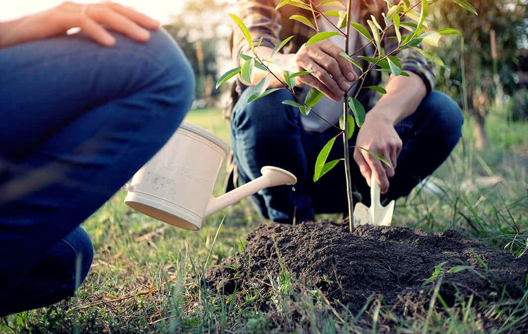Cropped people planting small tree
